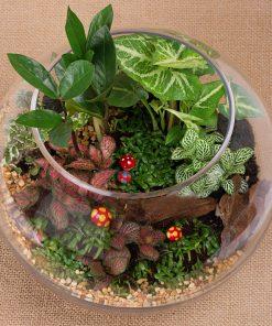 Rainforest Garden Terrarium (TE01)