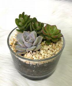 Succulent Terrarium - Minimalist (TE06)