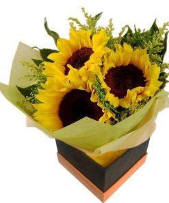 Sunflower in a Box (S04)