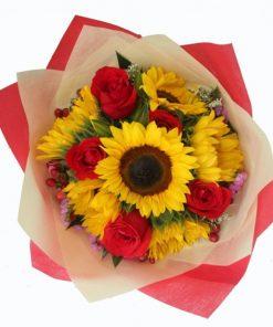 Sunflora Rosa (XM06)